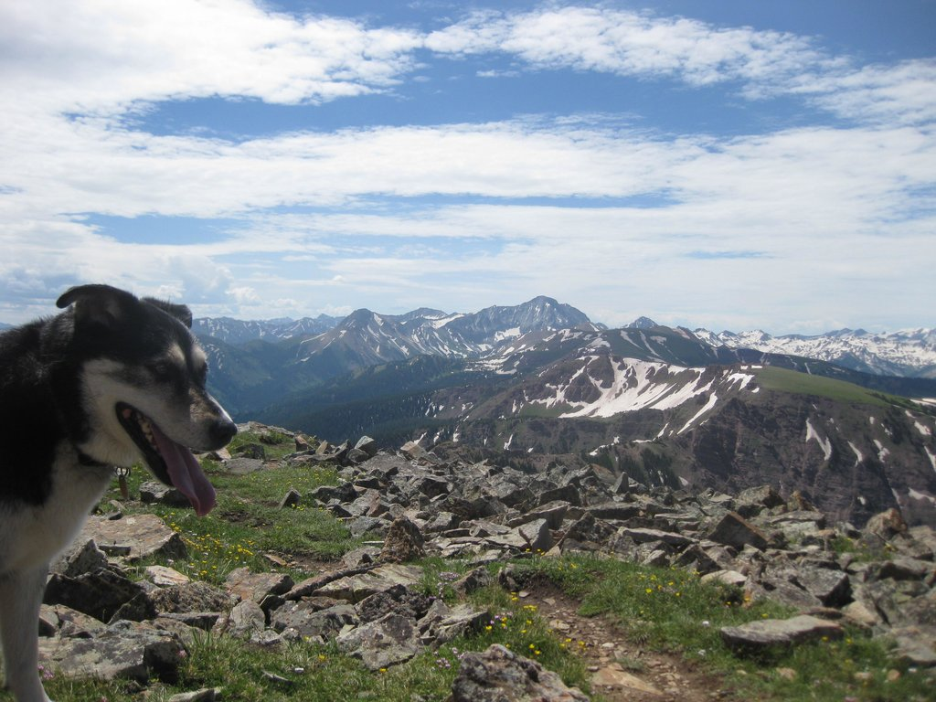 Dog and Capitol Peak