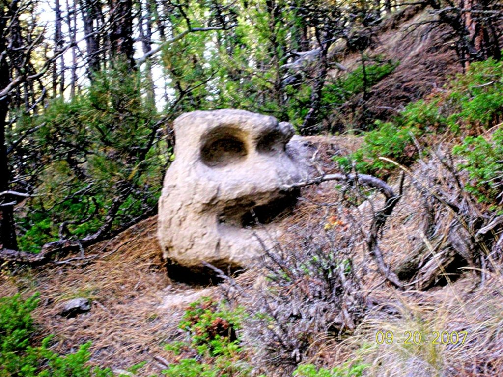 Forest Mystery Face