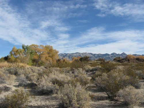 Mojave Desert Scrub & Autumn Colors