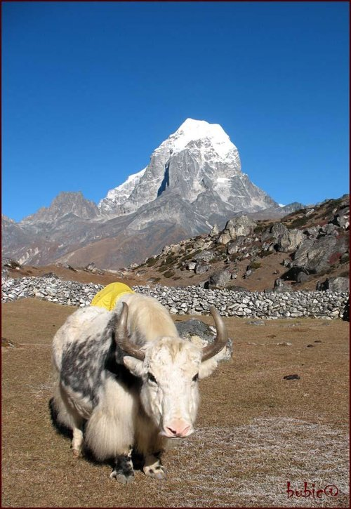 Yak and mountain...