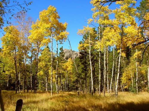 Fall View Along Trail 4