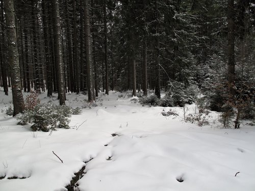 Perfect snow in the Black Forest