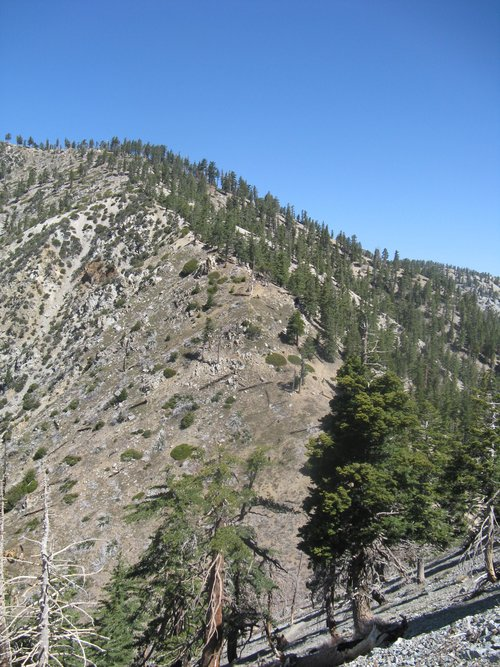 Bighorn ridge to Cucamonga trail