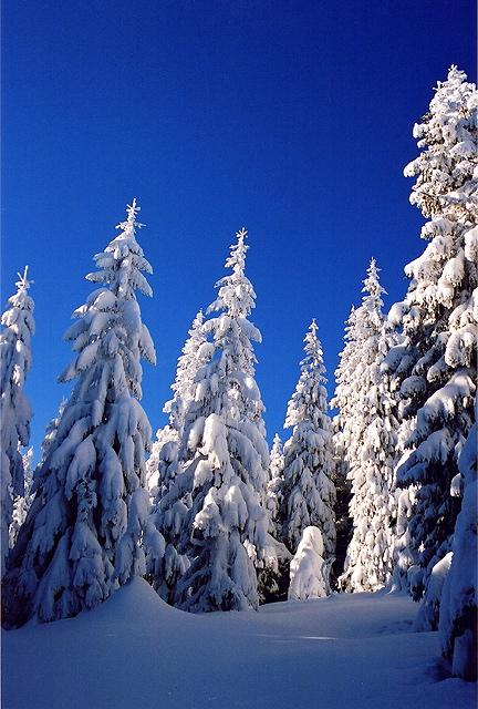 Beskidian forest in winter <br />