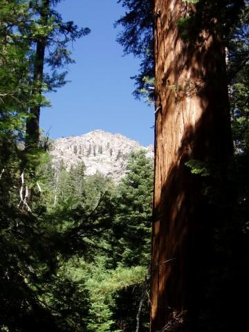 Moses Mountain and Giant Sequoia
