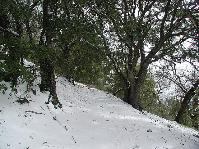 Snow on the trail going up...