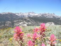 Indian Paintbrush and the Minarets