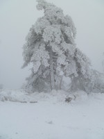 Frozen tree at 1300m. elevation