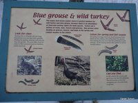Grouse and Turkeys